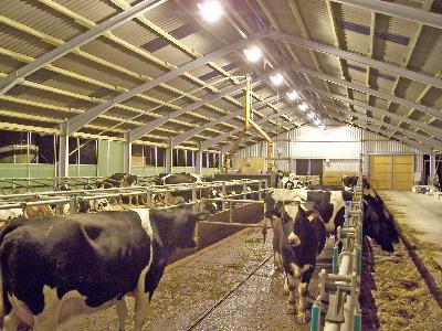 Освещение животноводческого помещения